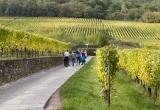 Alsace_2012-2562